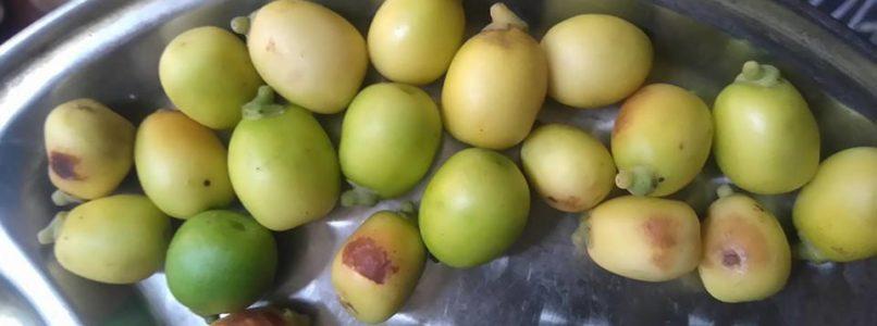 இயற்கை ஷாம்பு குமுளம் பழம்
