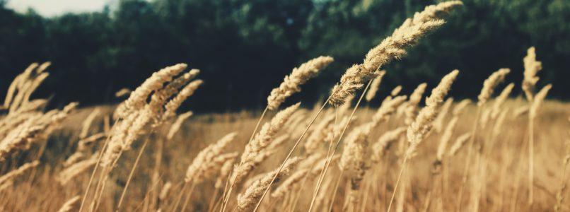 natural-farming-agriwiki