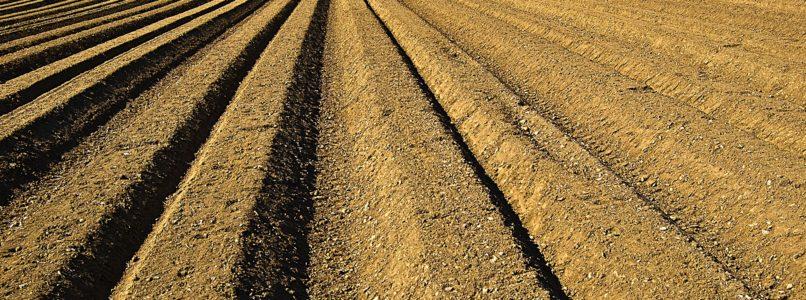 பாசன நிலத்தை எவ்வாறு தயார் செய்வது