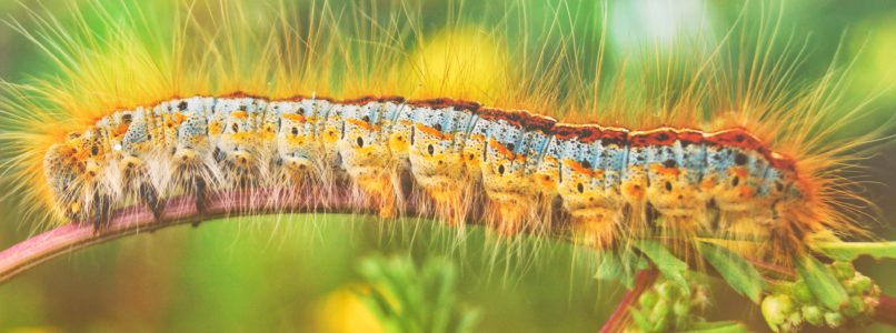 பூச்சிகளையு நோய்களையும் கட்டுப்படுத்துவதற்கான இடுபொருட்கள்