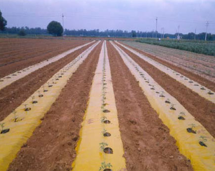 Yellow and brown mulch
