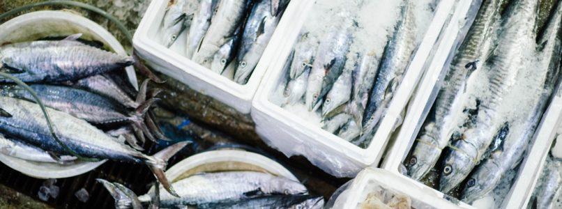 மீன் வளர்ப்பு fish farming techniques