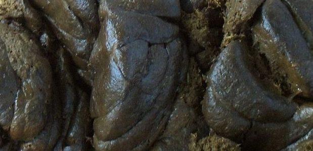 ஒரு மாடு தினம் தருவது 10 கிலோ சாணம் cow_dung