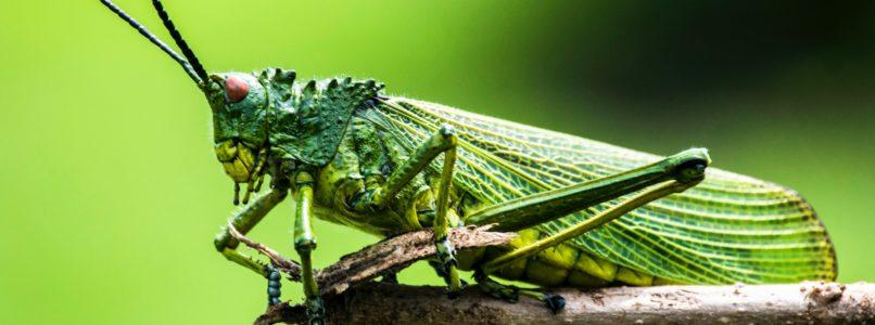 இயற்கை பூச்சி விரட்டி – அரப்பு மோர் insects