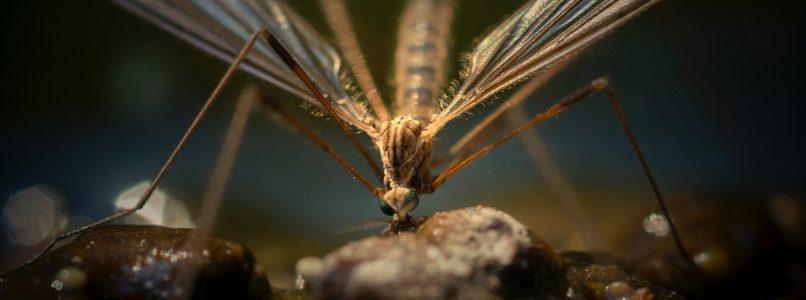 கொசு விரட்ட பச்சைக் கற்பூரம் Natural mosquito repellent