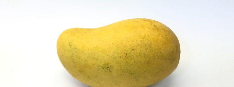 mango மாம் பிஞ்சுகள் உதிர்வதைத் தடுக்க